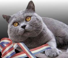 Passez un excellent 14 juillet, de la part de toute l'équipe de Cat Apart !