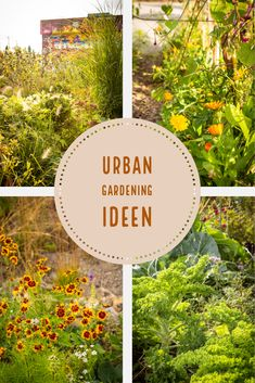 Our city garden show - over and over - # Different Plants, Types Of Plants, Organic Gardening, Urban Gardening, Gardening Hacks, Climbing Hydrangea, Garden Show, Garden Borders, Garden Structures
