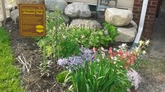 Marc Yamaguchi built a rain garden in his front yard more than a year ago to…