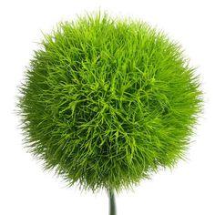 Green Wicky Wholesale Bulk Fresh Flowers