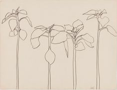 Art & Botany: Ellsworth Kelly's Plant Drawings | Garden Design
