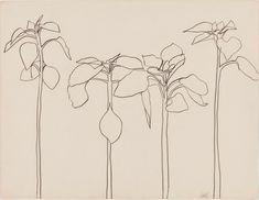 Drawing Line Flower Ellsworth Kelly Ideas Botanical Drawings, Ellsworth Kelly, Art Drawings, Drawings, Flower Drawing Tumblr, Plant Drawing, Flower Drawing, Art, Ellsworth