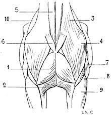 Image result for horse head proportions