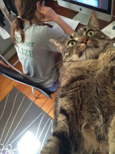 28 Cats That Forgot How to Cat