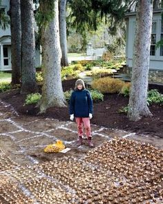 Martha Stewart's bulb-planting technique -- totally steal-worthy! This looks very easy! Much better than digging individual holes. :) fertilizing, fertilizer, lime, tulip planting, preparation, planting plan