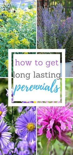 Perennials are a great way to add bits and pieces of greenery, color, and in some cases, even beautiful blooms to your yard. However, I know all too well how disappointing it is to pick a beautiful…MoreMore #GardeningFlower