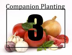Companion Planting Made Easy-ish: Part 3 of 3