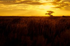 Kgalagadi in Gold by Mario Moreno on 500px