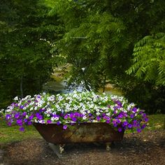 Bountiful Bathtub ~ A waterfall of petunias cascades out of an old cast-iron bathtub. So many of these antique beauties are discarded to make way for new fixtures, yet here this classic household icon is whimsically reborn.