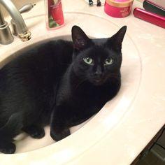 My sink kitty