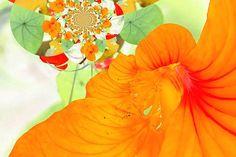 Kapuzinerkresse ein Fotogemälde von mir