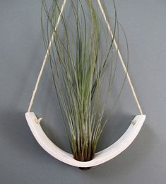 Hanging Air Plant Cradle tm  Natural White Earthenware by mudpuppy, $36.00
