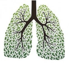LUNGS: The 9 Best Herbs for Lung Cleansing and Respiratory Support | Wake Up World > There were some here I hadn't heard of being used for lung support. Anything to help my very excited asthma stop twitching.....