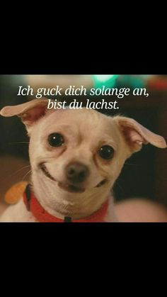 Ich guck dich solange an, bist du lachst. I'll look at you for so long, you're laughing . Funny Animal Pictures, Funny Photos, Funny Animals, Cute Animals, Funny Dogs, Funny Memes, Hilarious, Jokes, Funny Comments