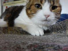 la gata nazira : que caras que gestos saludos   ahorayya2