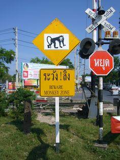 Kijk uit! Overstekende apen in #Lopburi #Thailand