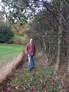 Stien ved marken. Disse træer skal snart fældes