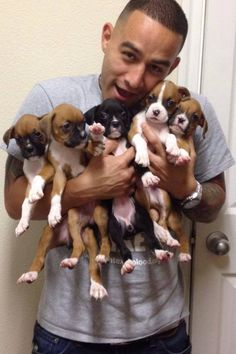 ❤️ Bouquet of boxer pups! Best delivery ever...