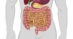 Type 1 Diabetes Research: Study Suggests Changes in Gut Bacteria Occur After Onset of Disease, Not Before