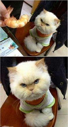 i did this to my cat and he was depressed when he had his sweater on