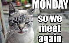 Monday, we meet again...