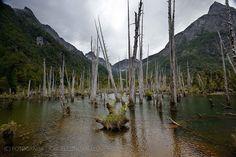 Laguna Alerces - Parque Tagua Tagua (Patagonia - Chile)