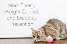 Raw Cat Food Diet Prevent Diabetes, Weight Control, Cat Food, Diet Recipes, Pets, Cat Feeding, Skinny Recipes, Animals And Pets, Healthy Diet Recipes