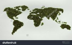 Map Of World From Green Tea Isolated On A White Background Stock Photo 154299695 : Shutterstock