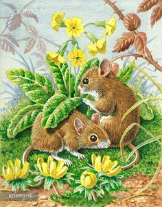 PortForLio - 'Spring Meeting' - two long-tailed field mice