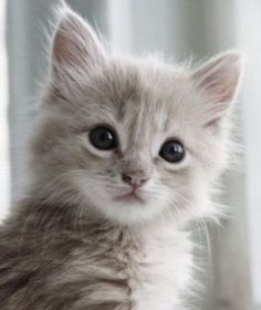Time for an extremely cute kitten……