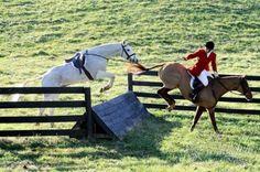good little hunt pony
