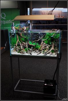Open Top Aquarium Leaded With Beautiful Driftwood http://www.driftwoodboss.com