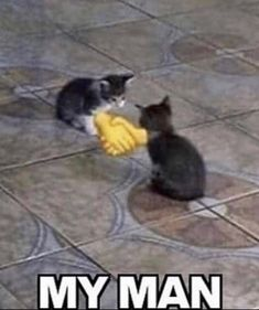 Cute Cats, Funny Cats, Funny Animals, Cute Animals, Stupid Funny Memes, Funny Laugh, Funny Images, Funny Pictures, Oui Oui