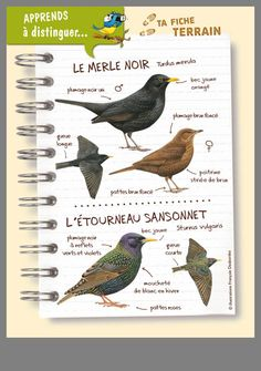 science infographics for kids * infographics kids Animals For Kids, Animals And Pets, Bible For Kids, Nature Journal, Bird Drawings, Zoology, Kids Education, Infographics Design, Romy Schneider