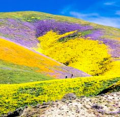 "Northern California ""Super Bloom"""