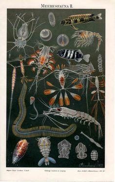 1889 Sea fauna ocean scene from antiqueprintstore. #SquidWhaleDesigns