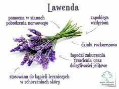 Lawenda Food And Drink, Health Fitness, Herbs, Healthy, Plants, Gardening, Diet, Health, Garten