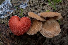 Herzliche Weihnachtsgrüße... von Moonshroom