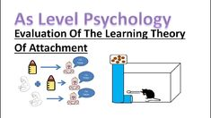 What is the learning theory of attachment. In this lesson we will recap the learning theory of attachment and also evaluate it using other psychological rese. A Level Revision, Psychology A Level, Learning Theory, Twitter, Instagram