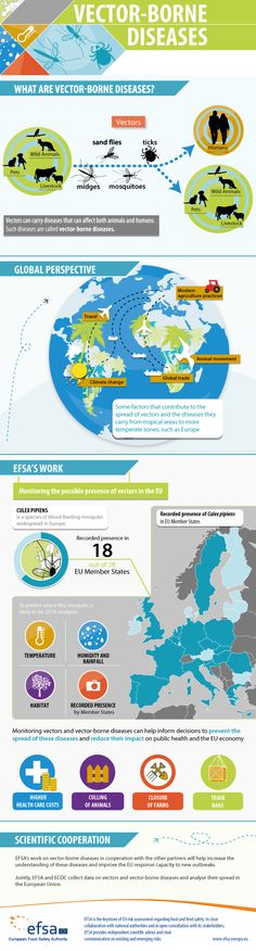 What are vector-borne diseases? What does EFSA do in this field? EFSA's latest infographic answers these questions and others.
