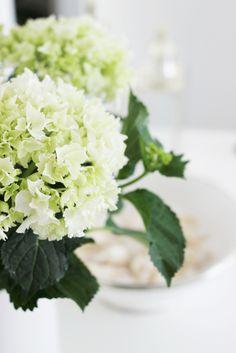 via Neuf Novembre Green Hydrangea, Hydrangeas, Flower Power, Color Themes, Colors, Bloom, Mansion, Cottages, Modern Farmhouse