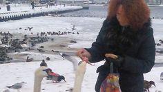 Nie dokarmiajmy łabędzi chlebem apelują specjaliści – Agatowska wie lepiej | Świnoujście w sieci #agatowska #sld #labedzie #zima #swinoujscie