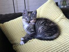 Sun 2en halve maand oud Cats, Animals, Gatos, Animales, Animaux, Kitty, Cat, Cats And Kittens, Animal