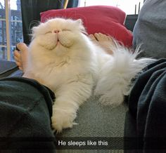 "tastefullyoffensive: "" (photo via Seattle Persian and Himalayan Rescue) """