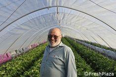 Italien Mein Geheimnis Fur Exzellente Erdbeeren Exzellent Erdbeeren Italien