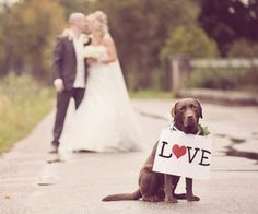 Love Dogs Wedding