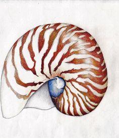 Nautilus Shell by Ice-wolf-elemental.deviantart.com on @DeviantArt