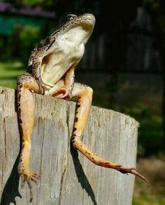 Frog in the Garden-2457800-happy-grog