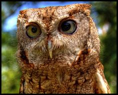 27 Pictures Of Owls That Will Make Your Bones Shiver – The Awesome Daily - Your daily dose of awesome
