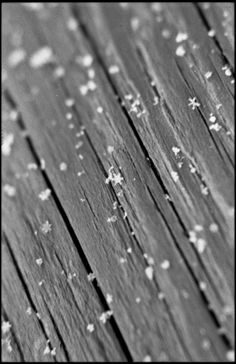 this is so pretty, and I love how can see the individual snow flakes!  wood and snow